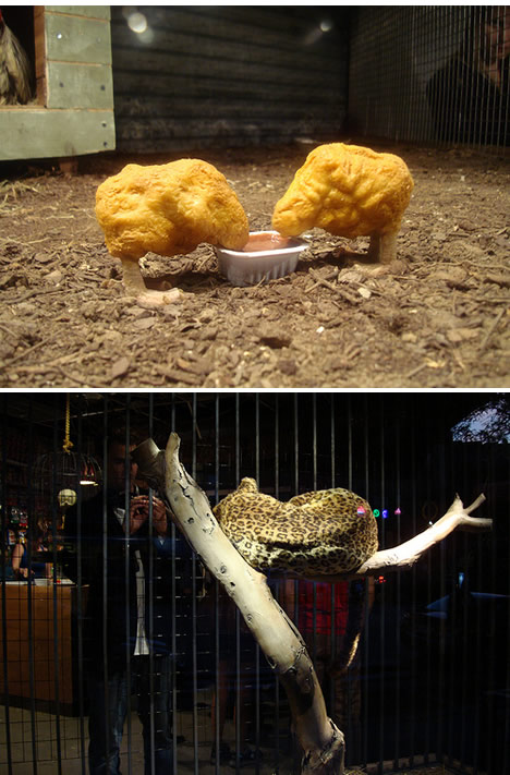 Banksys pet store chicken nuggets leopard