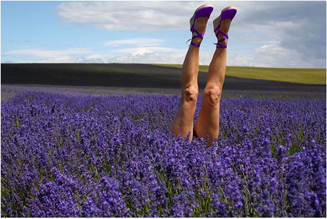 Sosij_lavendar_field_legs_photography