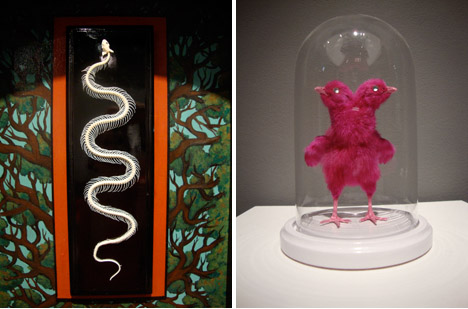 Snake_skeleton_rogue_taxidermy_show