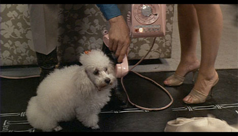 Midnight_cowboy_pink_poodle