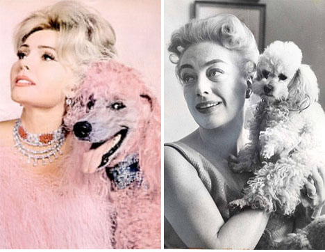 Zsa-zsa-gabor-pink-poodle-joan-crawford