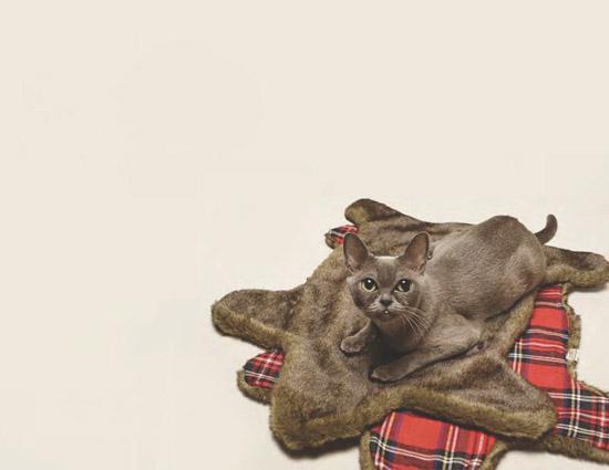 Loyal-Luxe-Faux-Bearskin-Cat-Rug