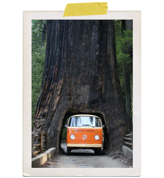 Chandelier-drive-through-tree-california-redwood