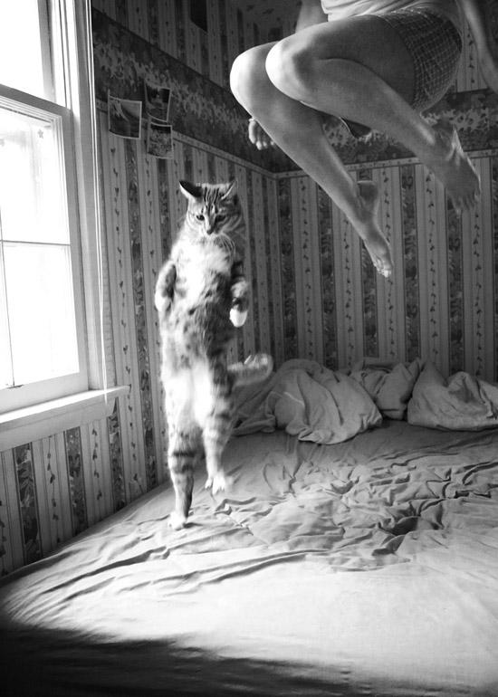 Leslie-m-k-jumping-cat