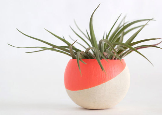 Melon-Pod-with-Velutina-Air-Plant-planter