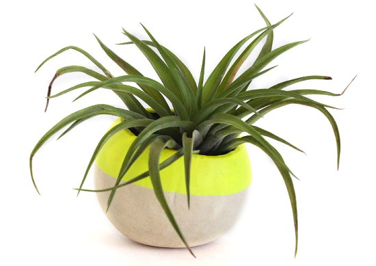 Neon-Yellow-Hand-Dipped-Pod-planter