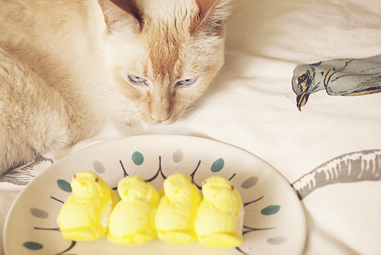Dylan cat Easter Peeps hunter