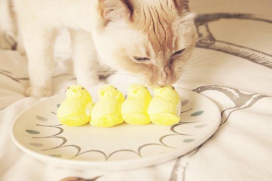 Dylan cat Easter Peeps chomper