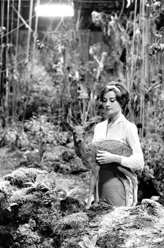 Audrey Hepburn with deer Bob Willoughby