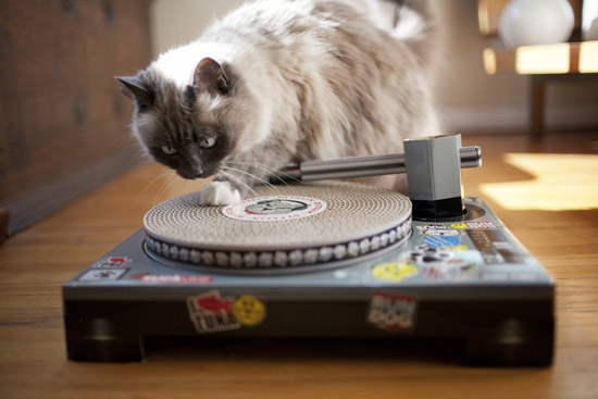 Cat Scratch Fever: DJ Turntable Pad