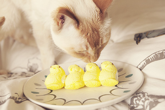 Dylan cat Easter Peeps hunter 2