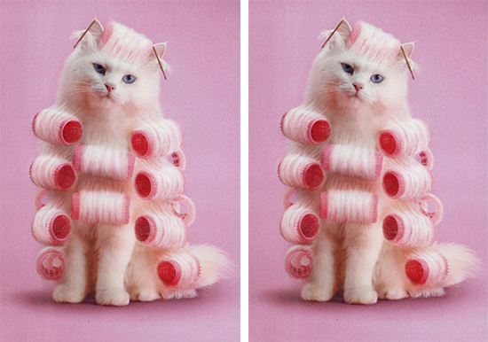 Pink cat hair rollers