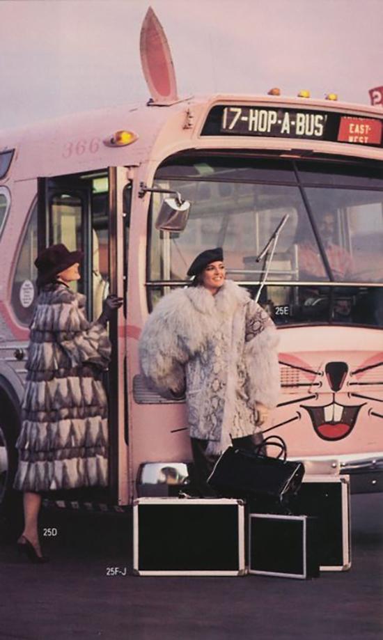Hop a Pink bus