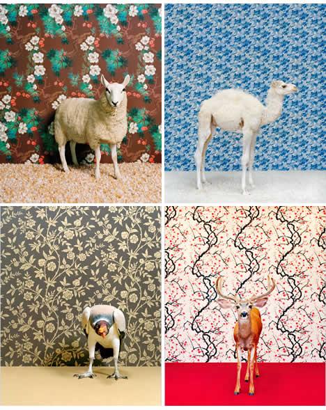 Catherine_ledner_animals